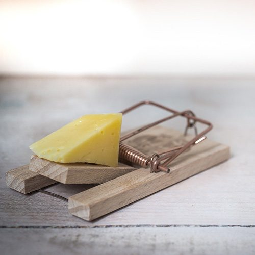 mouse trap with cheese wedge
